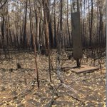 Image for the Tweet beginning: First post-fire on-ground photos from