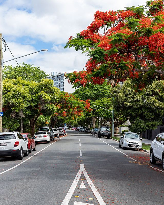 Such a beautiful road in Newfarm. This was taken after walking along the Newfarm Riverwalk, I love this area! . . Follow mattmaguirephotography and visit http://www.matthewmaguirephotography.com it's a good ideapic.twitter.com/mj6AEdo9Em