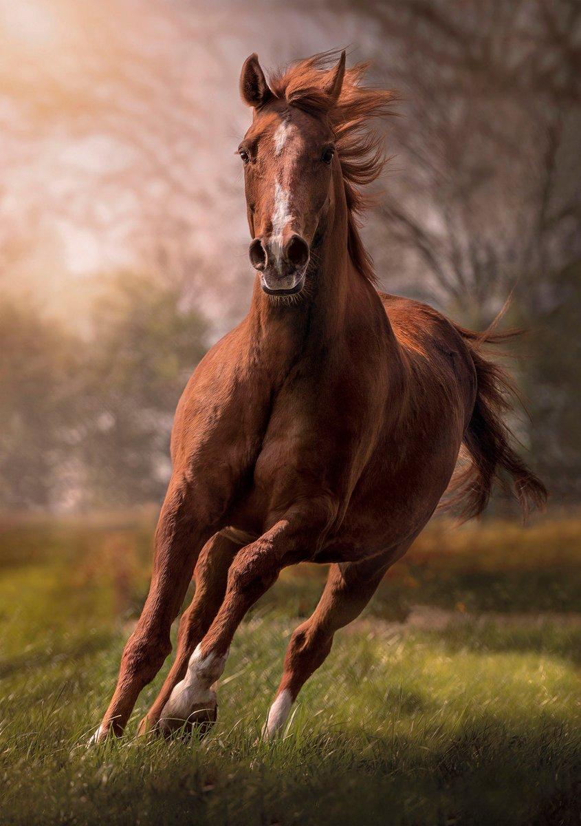 Смотреть картинки кони красивые