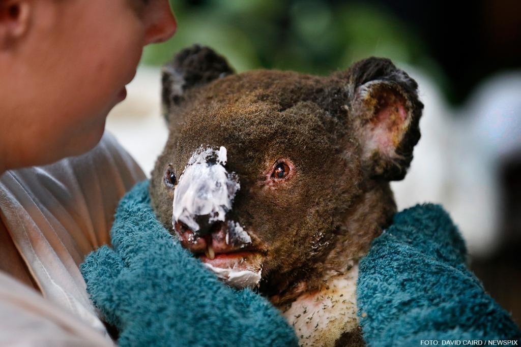 Australiens dyr har brug for hjælp! Vi sender en akut donation til WWF, og vi vil også gerne give dig mulighed for hjælpe. Pengene går ubeskåret til WWF i Australien, som vurderer, at skovbrandene har kostet over 1 milliard dyr livet. Tak for støtten 🙏 https://t.co/5lw8n6pZc3 https://t.co/rtQHWTwkSi