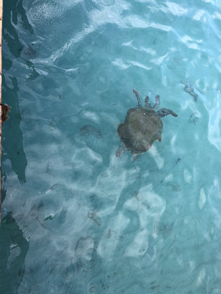 The turtles (only 1 in this pic) I got to swim with on a recent vacation. It was epic!! Do things that make you happy. Any chance you get. #ThrowbackThursday #ThankfulThursday