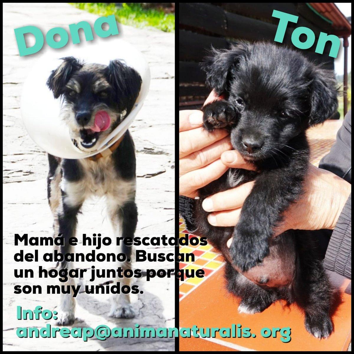 ¿Recuerdan a la familia de perritos que rescaté hace aprox. un mes en una vereda de Subachoque? ¡Ya están listos para adopción! Mamá y bebé van juntos, si o si ❤️ Interesados, escribirme a: andreap@animanaturalis.org para enviarles el formulario de solicitud de adopción. Bogotá.
