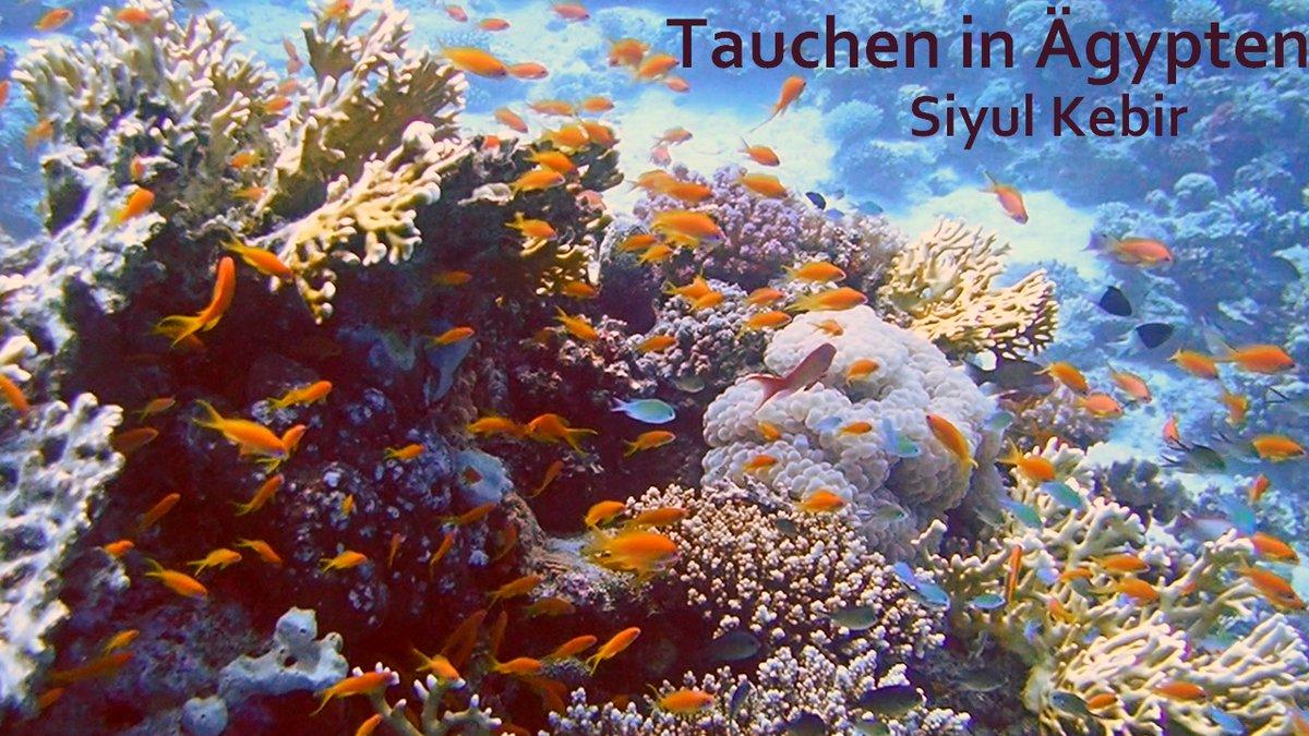 Hey ihr Lieben  Mein nächstes Tauchvideo ist fertig. Hier seht ihr die Formen- und Farbenvielfalt der wunderschönen Korallen und Fische besonders guthttps://www.youtube.com/watch?v=wYOw0QYQ3iA…  #tauchen #diving #Tauchsafari #RotesMeerpic.twitter.com/glWAGUiyjy