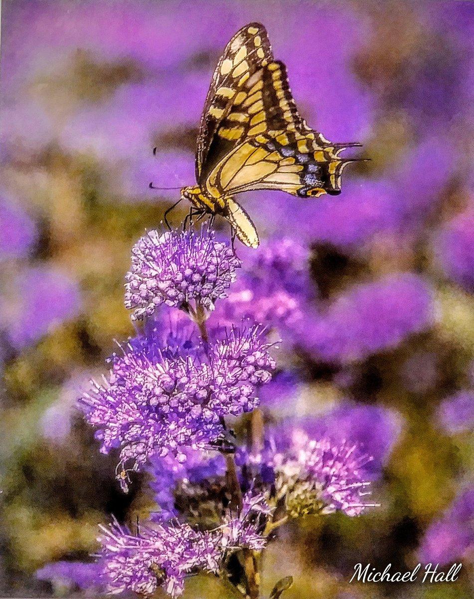 Dreaming About Spring #NatureHeals #goodvibesalways #FlowerReport #PhotographyIsArt