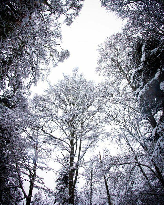 Tendance du jour #resterchezsoi #snow #instamoment #celdesphotography #occitanie #camurac #photooftheday #instantpresent #jaimelaude #deschampsdimages https://ift.tt/2sg8AD6pic.twitter.com/BFlRj4XOMc