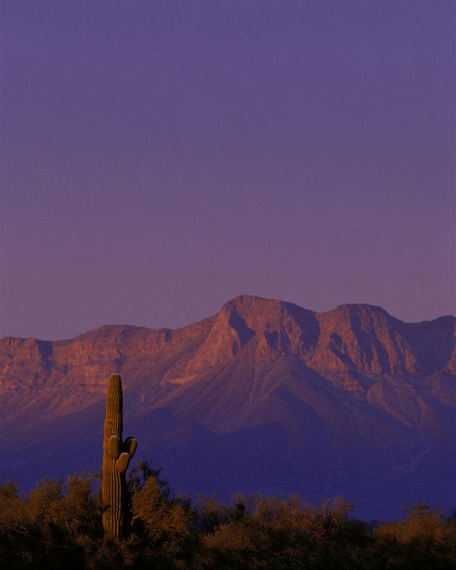 Wilderness Feature!  Cabeza Prieta Wilderness  Cabeza Prieta Wilderness has the distinction of being Arizona's largest Wilderness Area, encompassing nearly 93 percent of the Cabeza Prieta National Wildlife Refuge.   https:// wilderness.net/visit-wilderne ss/?ID=90&utm_source=Social&utm_medium=Twitter&utm_campaign=0110-Cabeza  …   #wilderness #cabezaprieta<br>http://pic.twitter.com/CfJgTEmYC2
