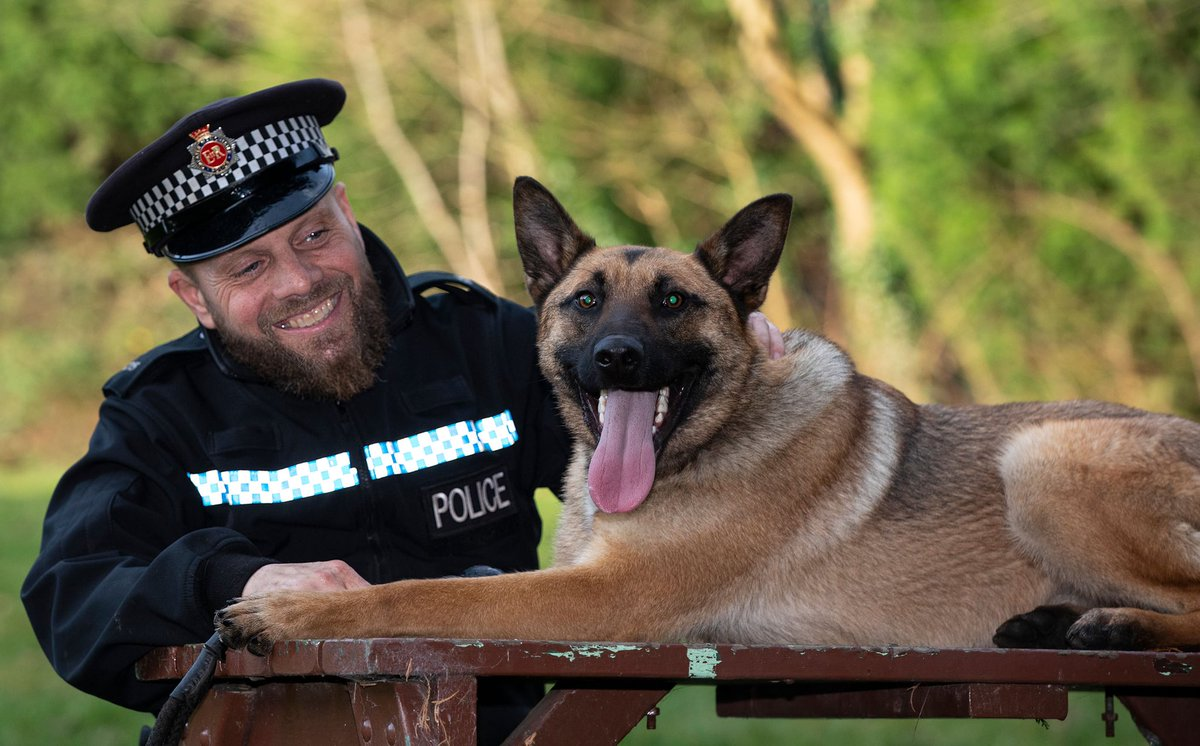 Seems there's hope for all of us who seem untameable... Jake is a rescue dog. He's also just been trained to become a police dog with @gmpolice.