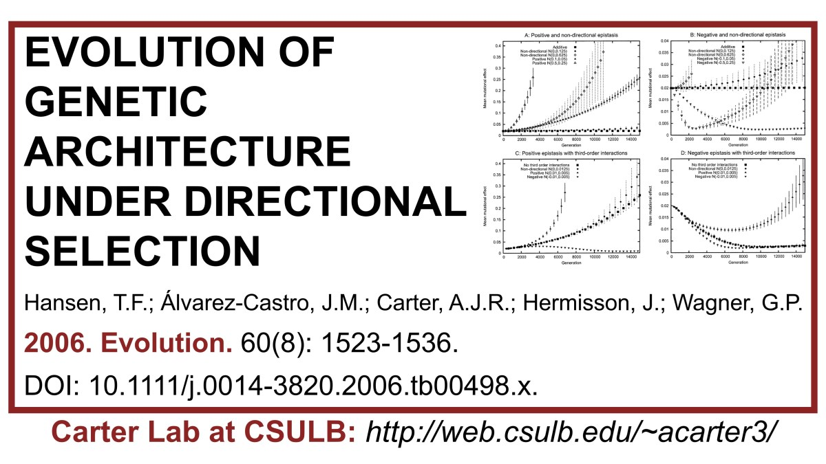 Carter Lab publication: Evolution of genetic architecture under directional selection. Using theory and simulations to model effects of epistasis on selection response.  #Carterlab #populationgenetics #popgen #epistasis #selection #evolution #evolvability