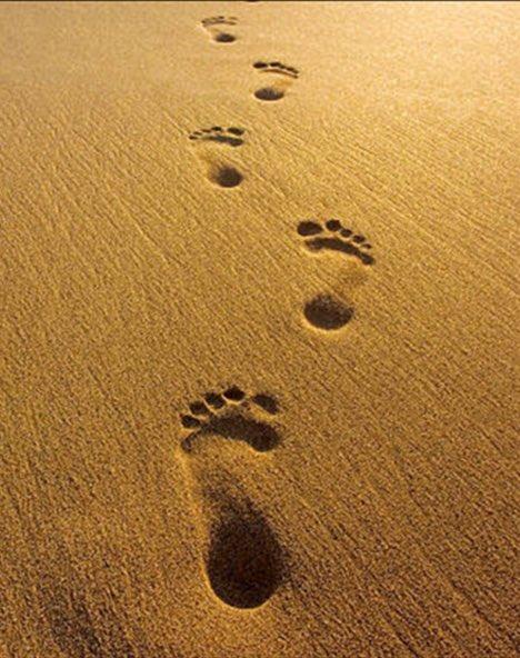 المُخلص كمن يسير على الرمل ترى أثره ولا تسمع خطواته ..