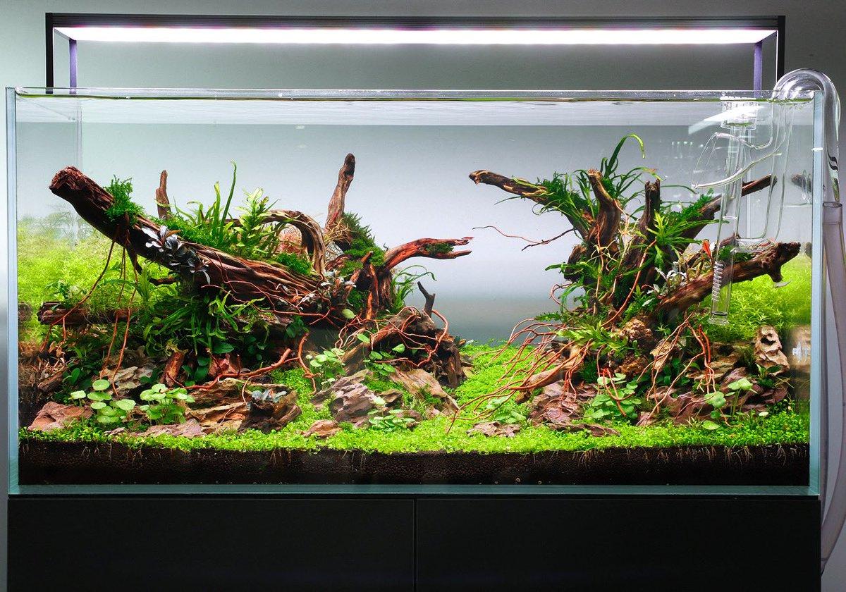 Aquarium Gardens Aquargardens Twitter
