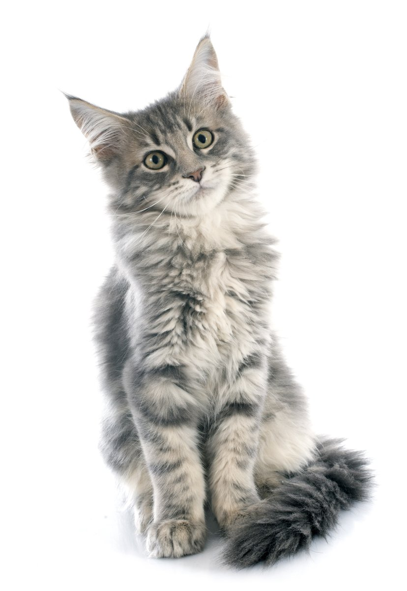 #Agent Thoths #Personal Log: Day 1071 The #cutest #alien #invasion ever! mistralkdawn.blogspot.com/2020/01/agent-… #free #comedy #sciencefiction #caturday #blog #series #catlovers #storytime #scifi #humor #cats #serial #storytelling