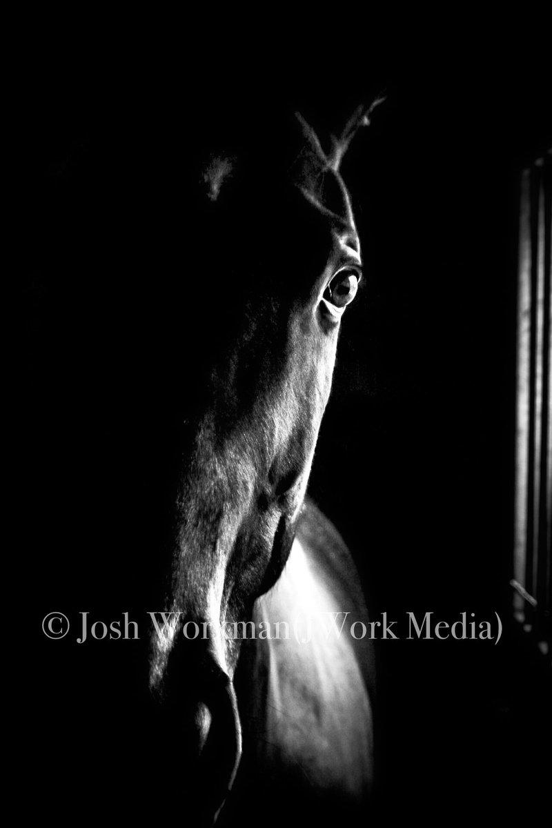#horse #horsephotograpy #blackandwhitephotography #canonphotography #jworkmedia #chasinglightpic.twitter.com/eKUTCkWOOR