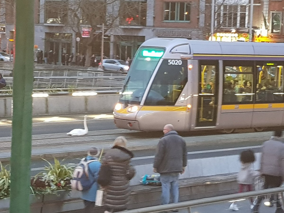 This is happening now in @DublinCity. Look who's holding off a Luas from whizzing past the bridge!! Love this, no matter how urban things get, the loveliness bit is the kindness that stays.