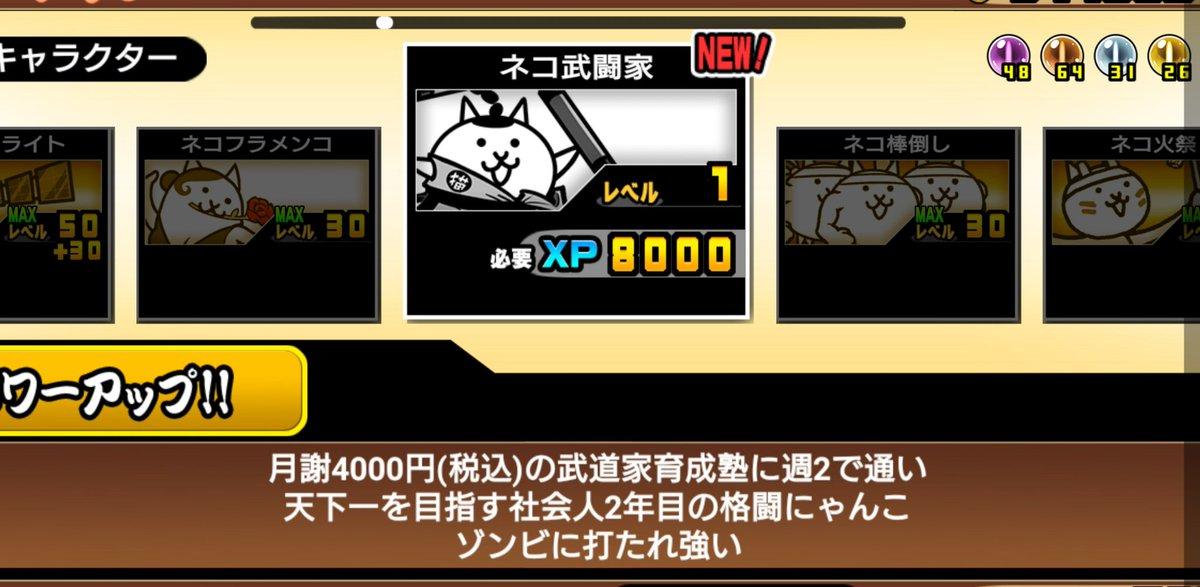 ネコ武道家