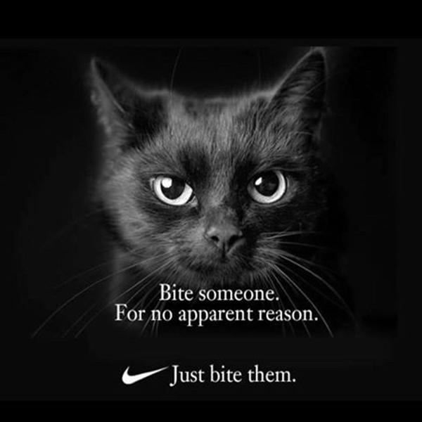 Sometimes humans require a little tough love... #MemeYour2019 https://t.co/dRtViid3Zs