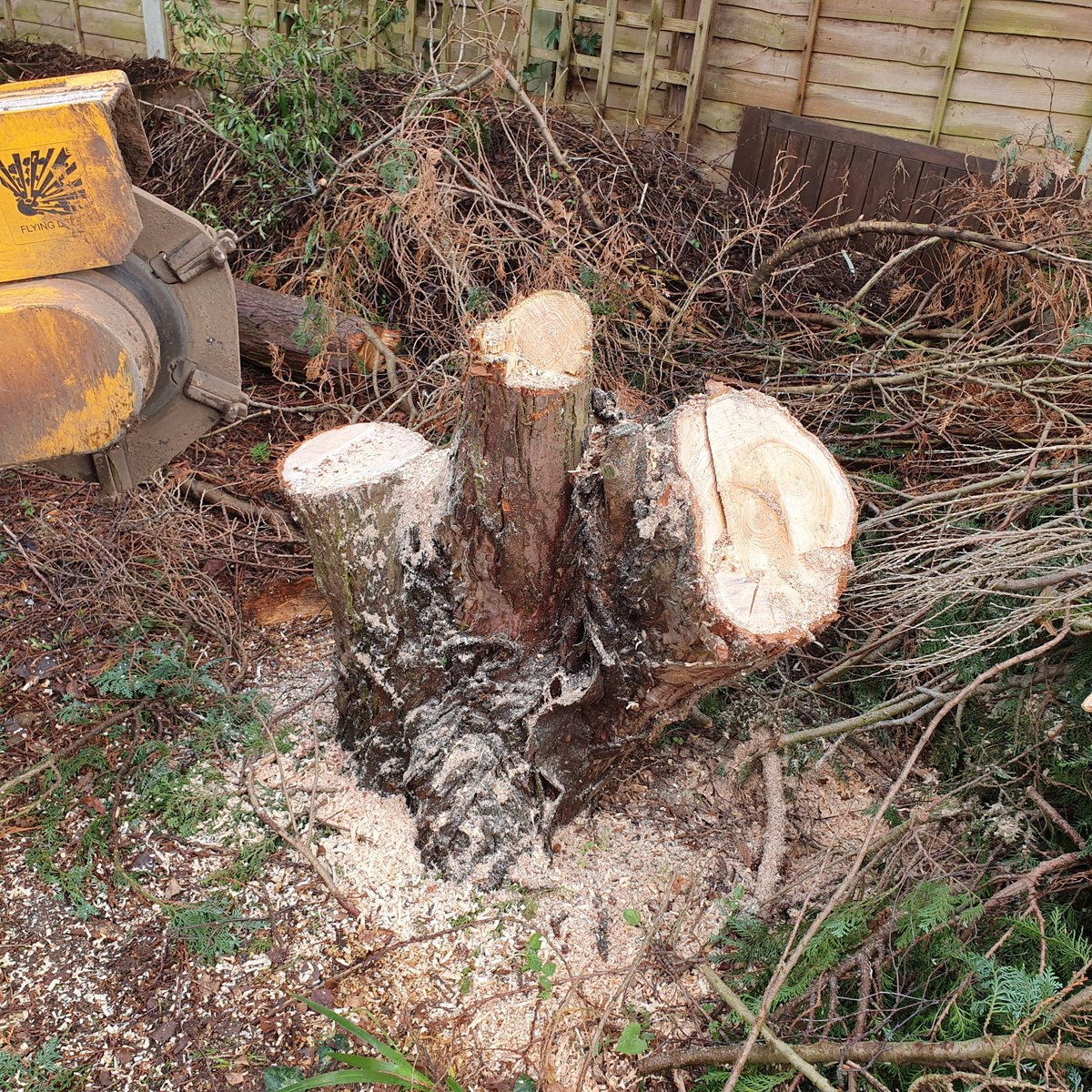 Removing a conifer tree stump at Finchingfield, Essex. This particular tree stump was lifting the path up. We are here t…