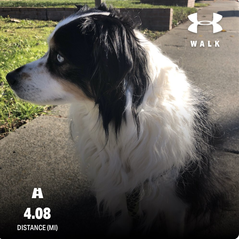 Benefits of walking...  - happy #australianshepherds  - 80 to 120 calories burned per mile  - Easy to track with apps like @uamapmyrun or mapmywalk - Improve mood - Strengthens bones and muscles  - Try walking 30 minutes a day!   #healthylifestyle #healthy2020 #walkpic.twitter.com/T6UQUfcNnj