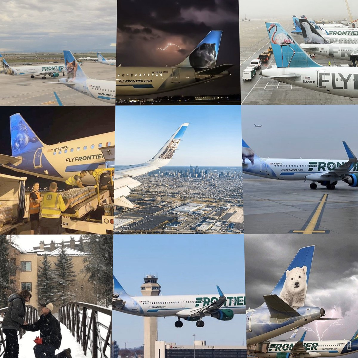 frontier airlines on twitter we were pretty fawn ed of 2019 thank you for making it an over whale mingly great year here s to 2020 flyfrontier frontierairlines herewithfrontier bestnine https t co xms1cvmwss twitter