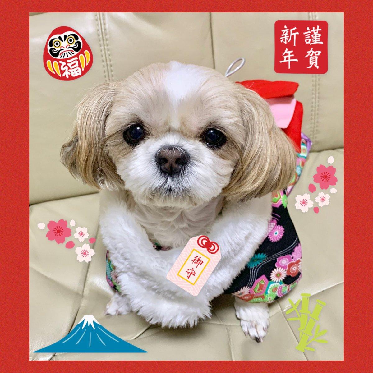 明けましておめでとうございます本年もよろしくお願いします #犬 #犬好き #犬好きな人と繋がりたい #犬好きさんと繋がりたい #ワンコ #ワンコ大好き #犬バカ部 #ふわもこ部 #鼻ぺちゃ犬 #シーズー #シーズー大好き部 #dog #dogs pic.twitter.com/C5iFhrbn3W