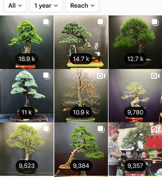 Scott Martin On Twitter 2019 Was A Great Year And 2020 Is Looking Even Better Happy New Year And I Honestly Wish Everyone Well With Their Personal Bonsai Journey May Your Buds