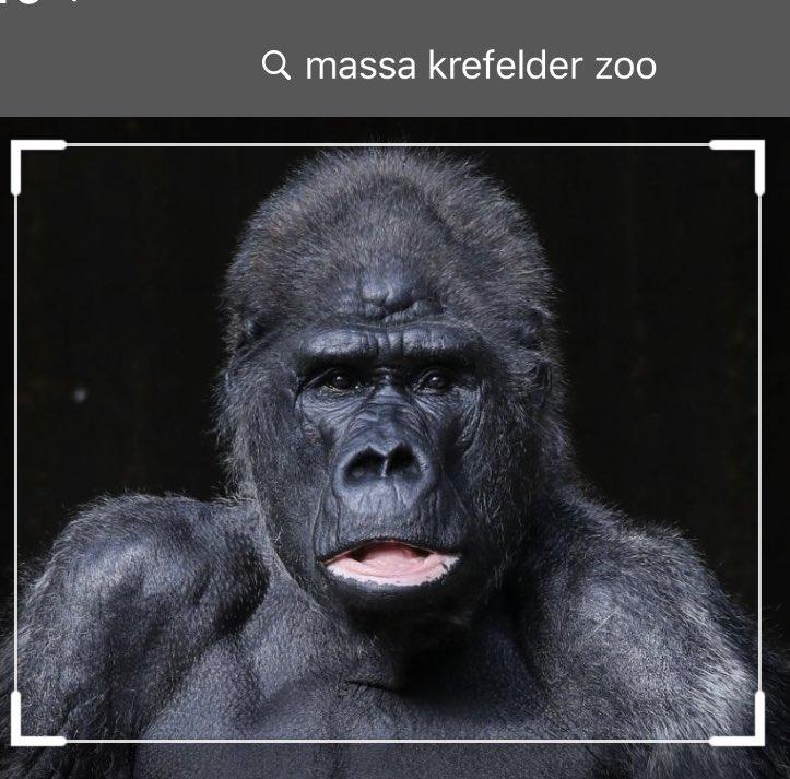 #KrefelderZoo