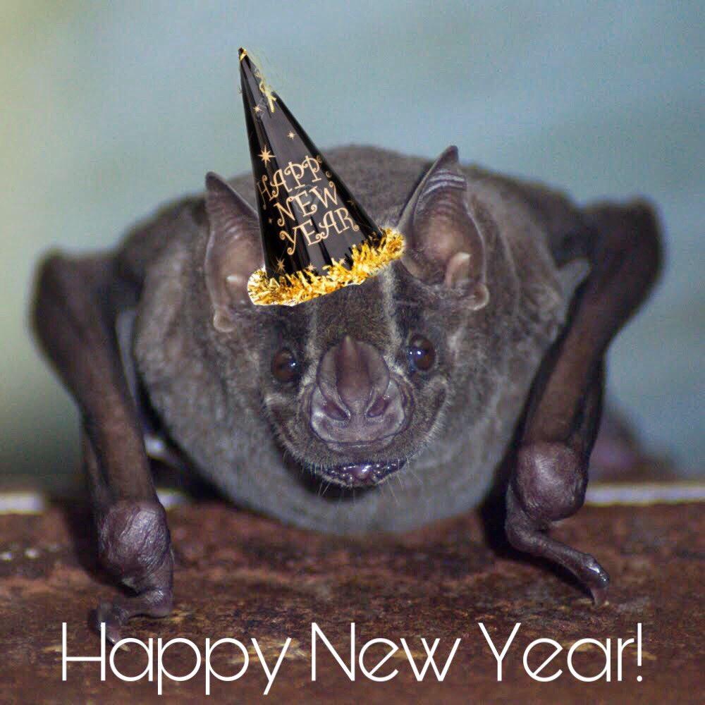 Happy New Year y'all! 🎉🦇❤️