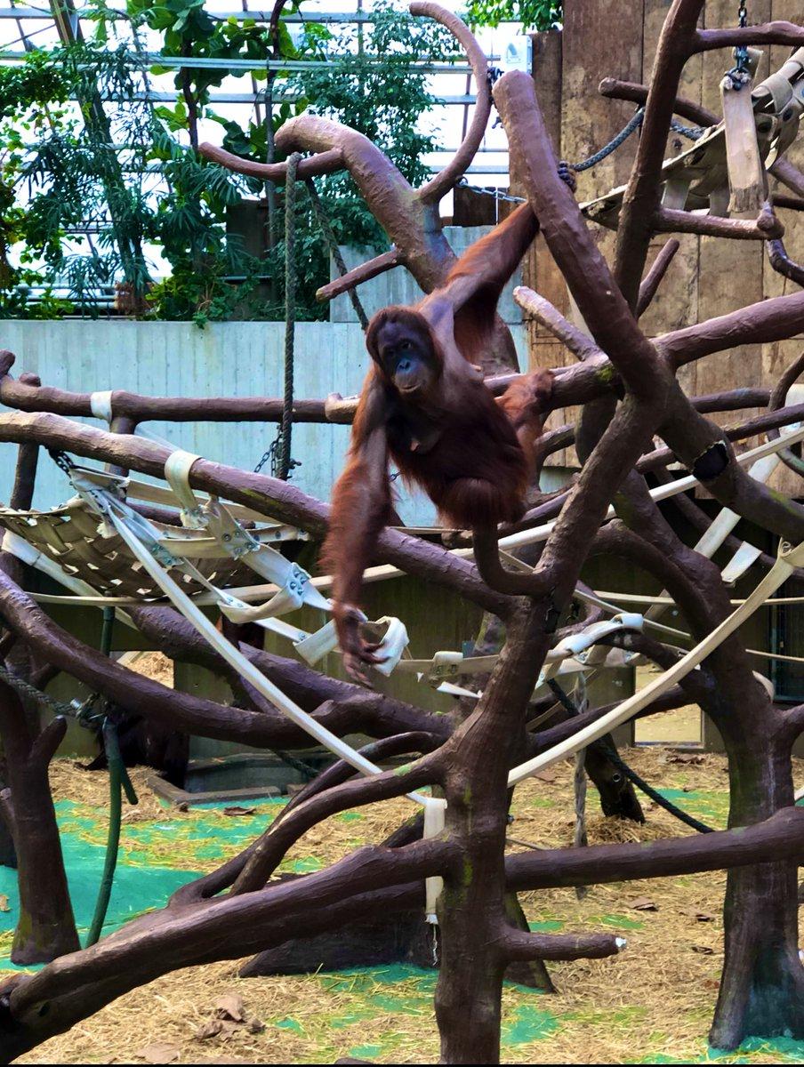 #ZooKrefeld