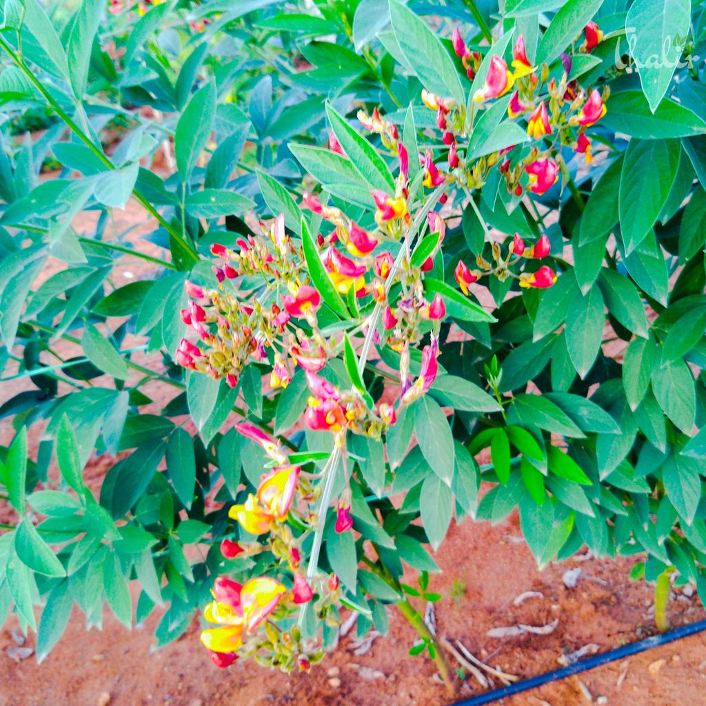 Flower Collection #flower #collections #motography #motoonepower #photography #macrophotos #photoexpress @motorolaindia @Photoshoppic.twitter.com/bZdFEsVvT9