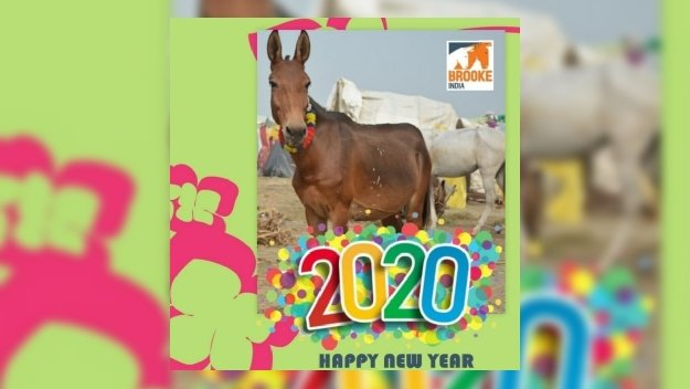 Happy New Year 2020 @TheBrooke  #BrookeIndia #EquineHealth #Equids #Animal #Welfare #Horsewelfare #Equinewelfare #EquineCharity #Livelihood #Community #Resilience #Compassion #Theoryofchange #Sustainable #Sustainability #HappyNewYear2020 #Indiapic.twitter.com/upThShciCj