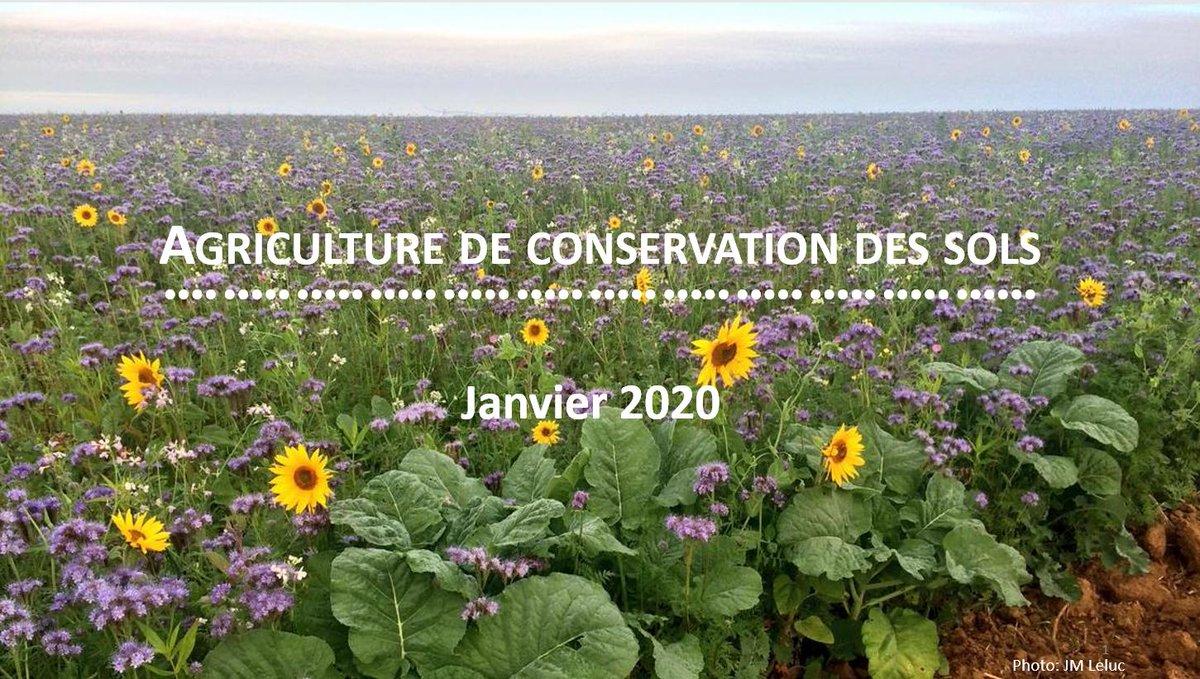 Hey, toi qui aime la nature, ça te dirait un petit thread sur l'agriculture de conservation des sols? C'est parti. Bon, déjà c'est beau tous ces couverts pleins de fleurs! (Merci @jmleluc😉) https://t.co/cmC7dX6M11