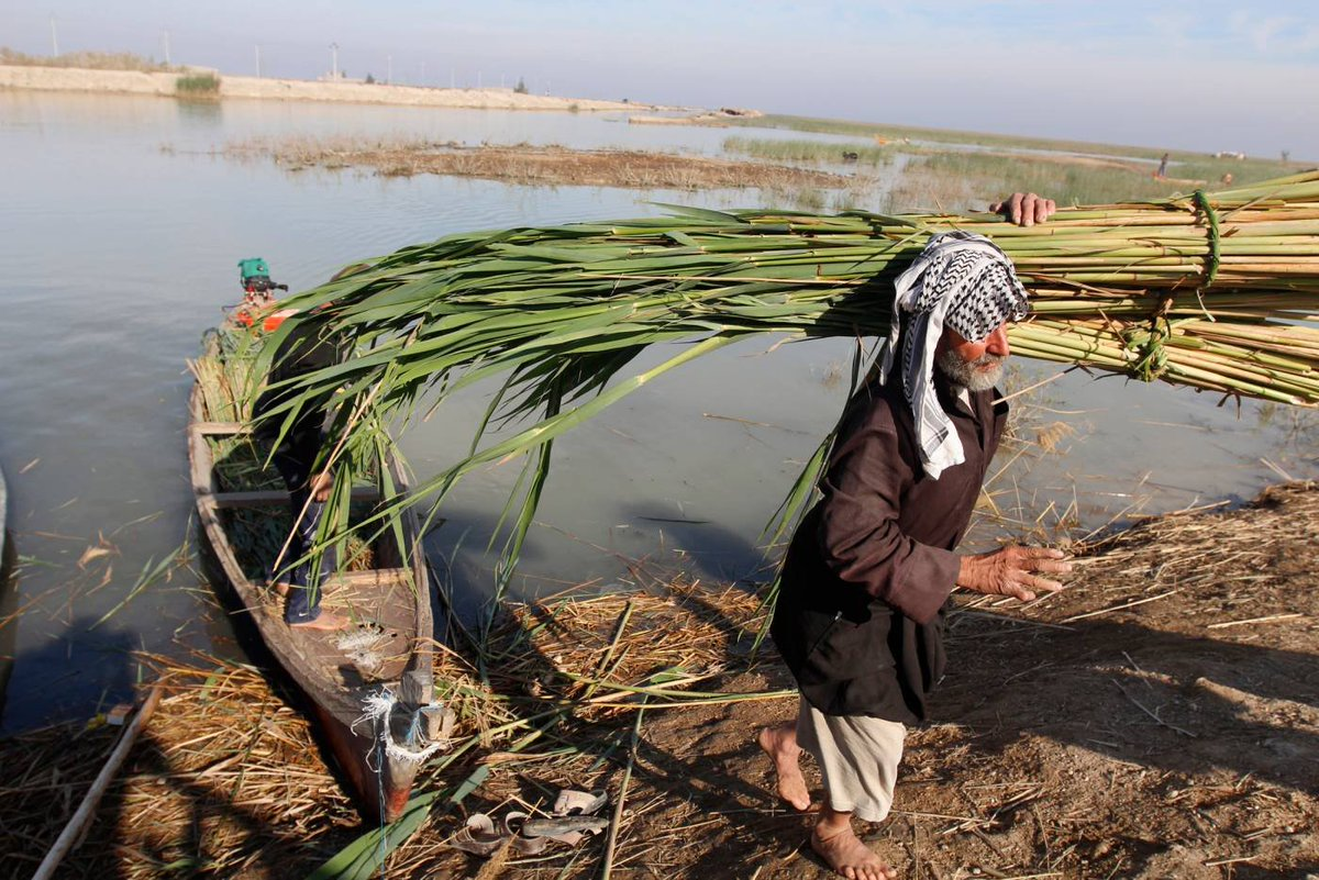 War, Mismanagement and Climate Change: Iraq's Environment Pushed to the Brink. My latest for @FanackMENA  on the relevance for dealing with environmental degradation in #Iraq  and the rising tide of citizens calling for change and international support.   https://fanack.com/pollution/iraqs-environment-pushed-to-the-brink/  …