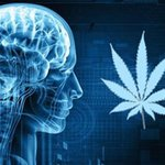Image for the Tweet beginning: Some effects of cannabis are