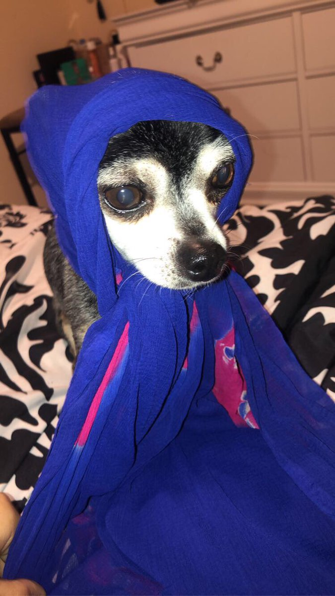 If little red riding hood was punjabi, my dog in his chunni would def be the bibi @PunjabiMemes pic.twitter.com/1pb0Psiicy