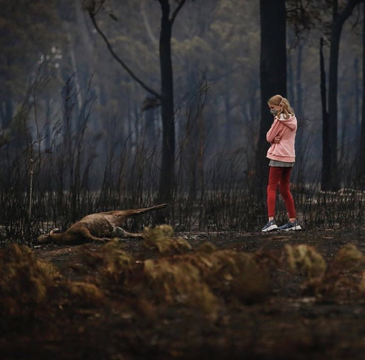 💔😢My Heart goes out to the families who have lost loved ones, homes, everything! Half a Billion Animals have died in the fires..😔 #GodBlessAustralia 🙏🏽🇦🇺 https://t.co/5m6rEQzn9u