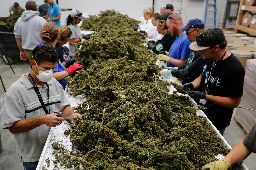 В испании купить марихуану марихуану купить в томске