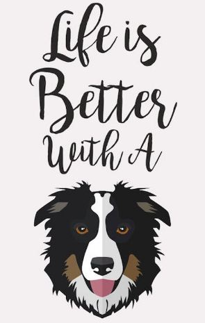 LIFE IS BETTER WITH A BORDER COLLIE 'If there are no dogs in heaven, then when i die i want to go where they went.'