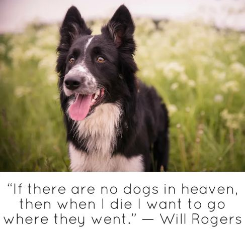 'If there are no dogs in heaven, then when i die i want to go where they went.'