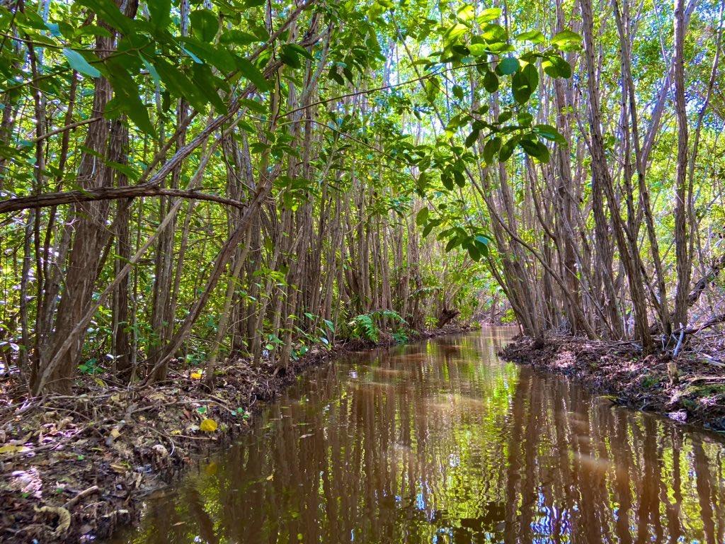 San Crisanto es famoso por su ruta de manglares.