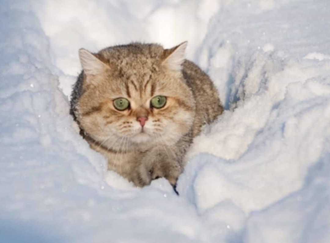 существенный недостаток открытка сколько много снега нерюнгри