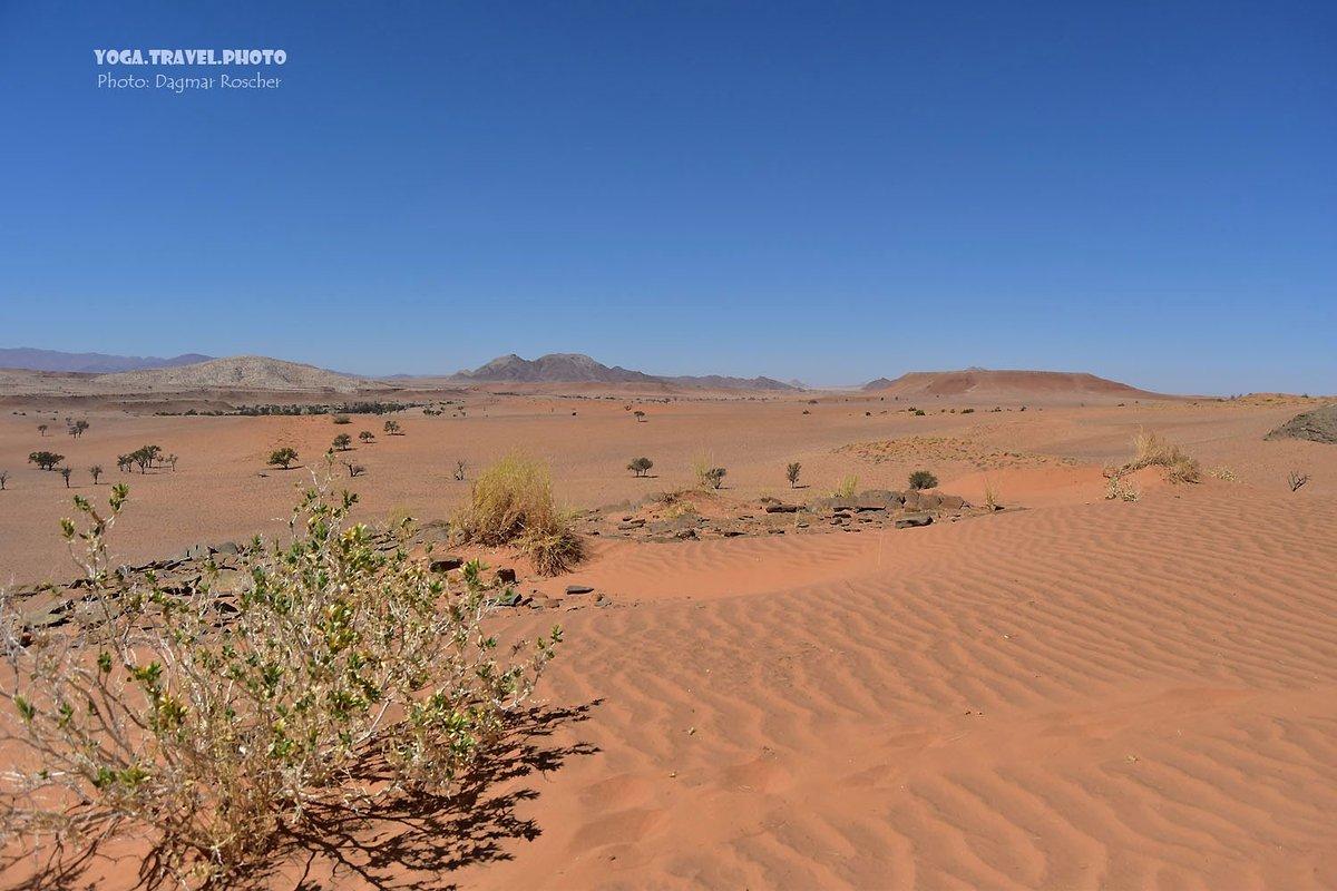 The orange Namib Desert Dunes - in the World's oldest Desert. On the way to Sossusvlei. #NamibDesert #Dunes #NamibDesertDunes #Namibia #Sossusvlei #NamibiaTravel #TravelPhotography #Wüste #WüsteNamib #Reise #Dünen #NamibiaReise #NamibiaDünen #ReiseFotografie pic.twitter.com/E06l6spAJo