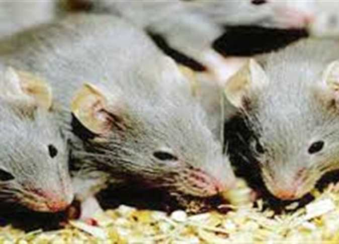 شركة مكافحة الفئرانبالخرج https://t.co/L6VTka5eqm https://t.co/Ku2r2phxDe