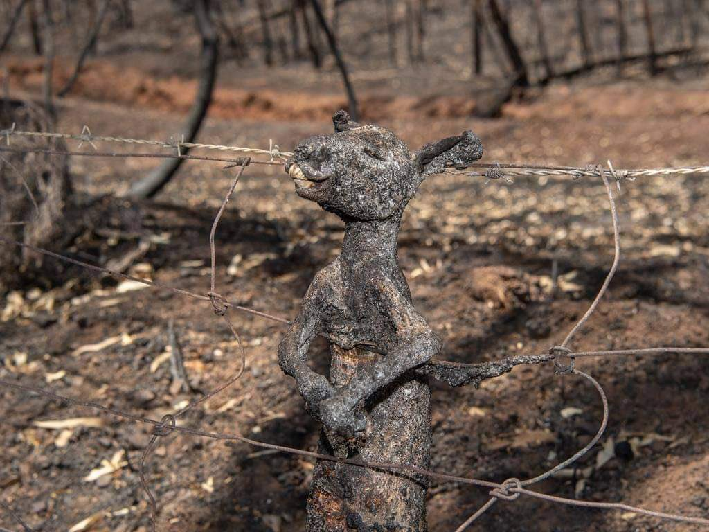 #AustralianBushfire