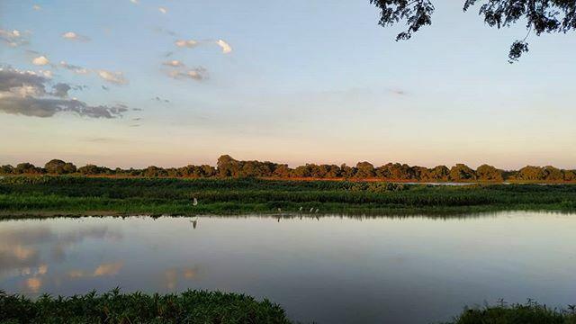 Família de Tuiuiús na @apabaianegra  #nofilter #nature #naturephotography #natureza #sunset #birds #birdwatching #birdwatchingphotography #birdphotography #wildlifephotography #wildphotography #wild #brasil #corumbaincrivel #Pantanal https://ift.tt/36p8XKepic.twitter.com/8LYL7RxZLq