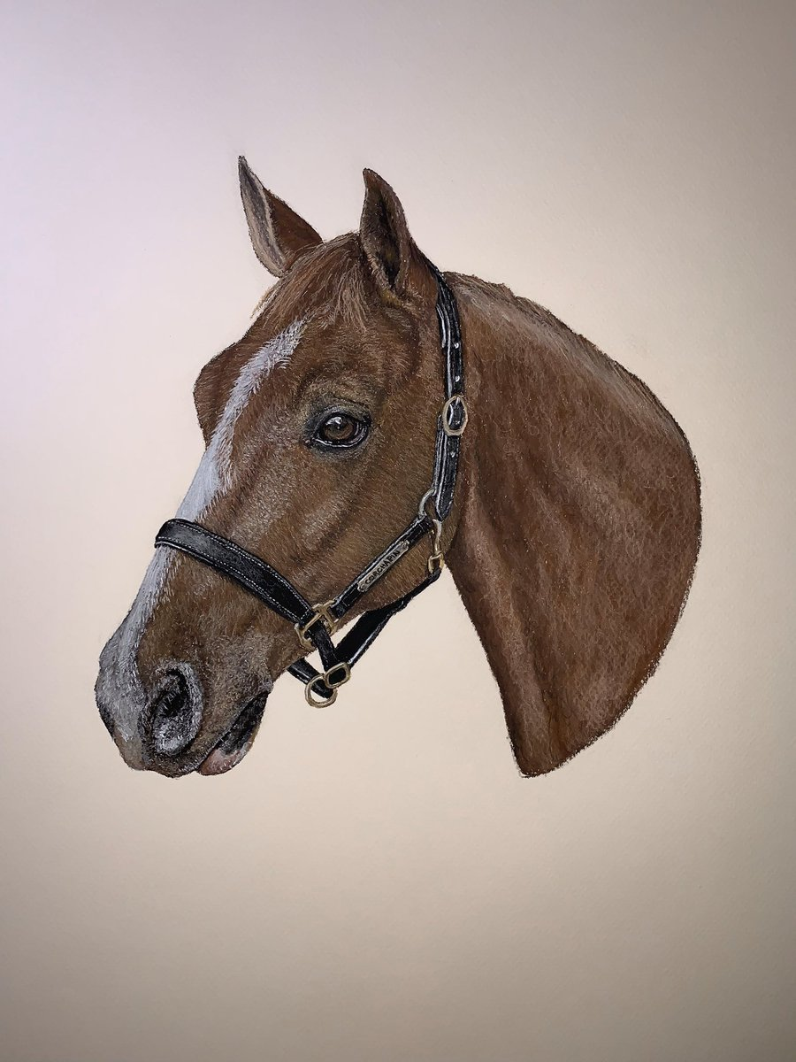 @HesterDressage could you possibly rt my finished and framed pastel of Cochapin which I did for a lovely lady!! Pretty pretty please with a huge cherry on top! (You may know the lady!!) xx https://t.co/x8PLFwgMc3