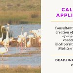 CALL FOR APPLICATIONS 📢: Consultant to support the creation of a consortium of organisations concerned with #biodiversity issues in the #Mediterranean Basin. Termes of References: https://t.co/rAkmkKncSl Deadline: January 15, 2020   #Jobs #BiodiversityMatters