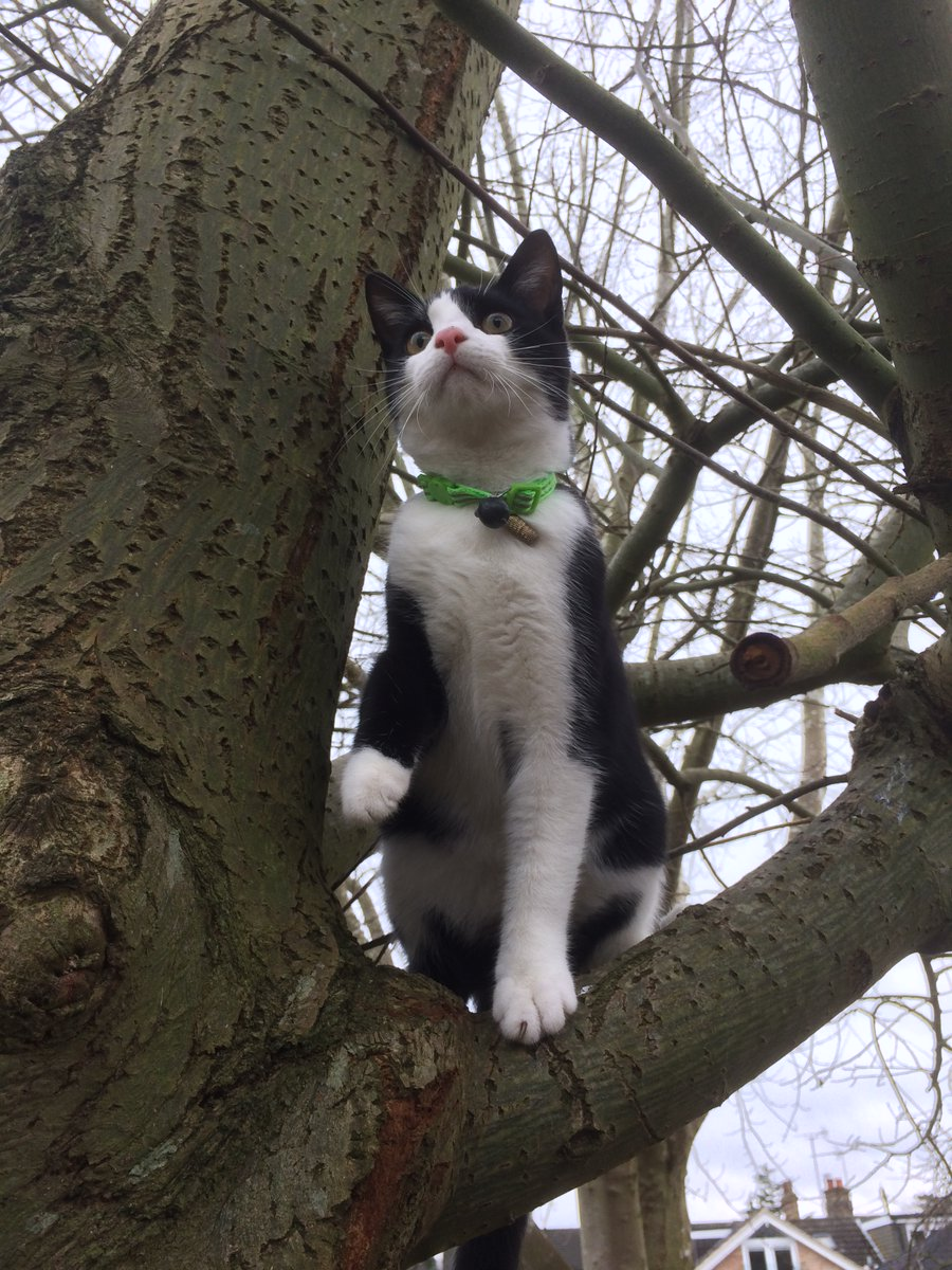 #caturday looking great from up here...