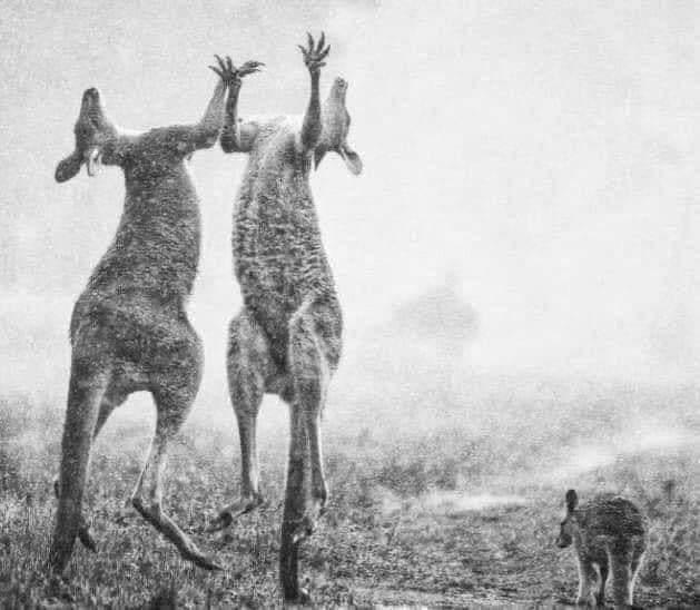 दुनिया भर की दुआएं लाई रंग, आस्ट्रेलिया की भयंकर आग में बेजुबानों के लिए राहत बनी बारिश  #australiafire #PrayForAustralia #AustraliaisBurning #AustralianBushfire  #AustralianFires #ViralPics pic.twitter.com/OH6bdcuO5w
