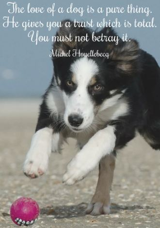 'The love of a dog is a pure thing. He gives you a trust which is total. You must not betray it.'