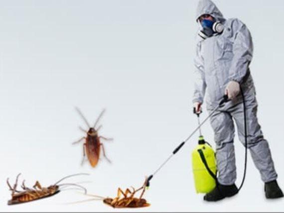 شركة ابادة الحشرات https://t.co/dwDQowlhX8 https://t.co/OlU5iv0r1c