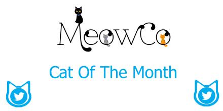 meowcocat photo